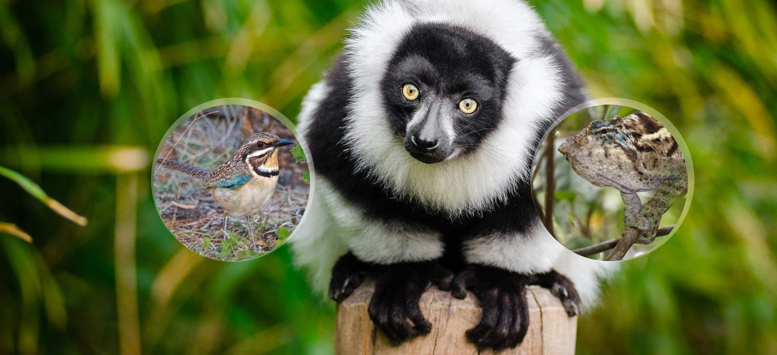 All inclusive madagascar vacation Wildlife tour