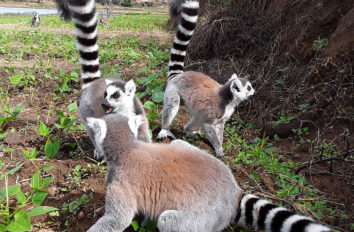 south tour madagascar holiday packages
